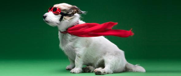 Бизнес идея одежда для собак бизнес планы праздника