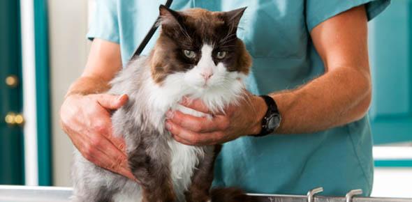 Личный опыт открытия ветеринарной клиники