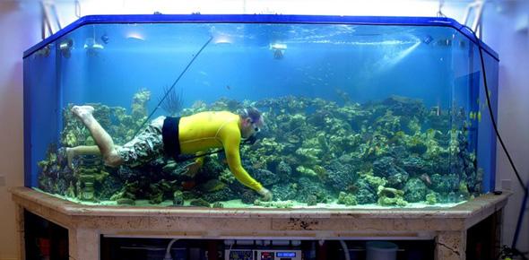 Идея для бизнеса – фирма по уходу за аквариумами