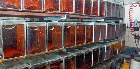 Как сделать бизнес на аквариумных рыбках?