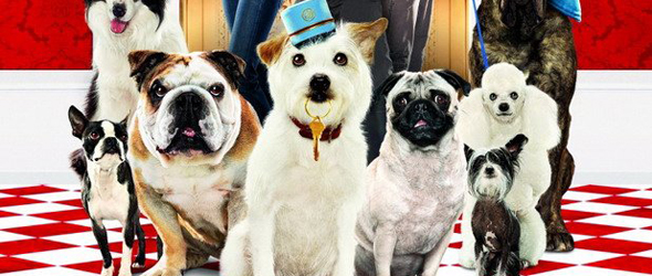 VIP-отели для собак
