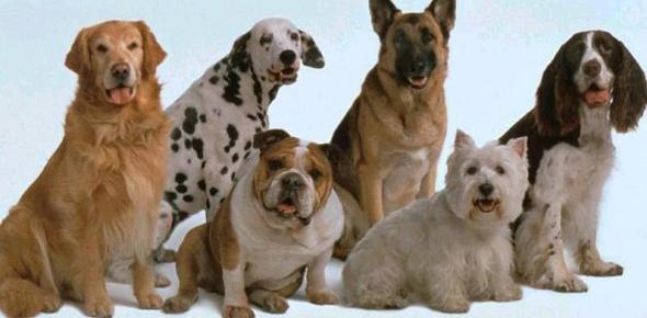 Идея бизнеса — курсы дрессировки собак