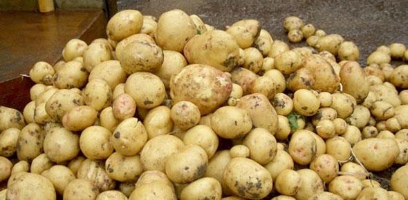 Как сделать бизнес на картошке?